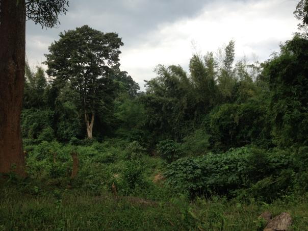 Regnskogen er så vakkert og frodig at man ikke tror det man ser.